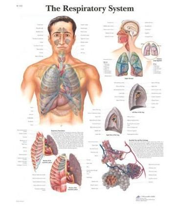 Dišni sustav (1322)