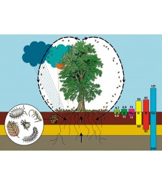 Ciklus materije u šumi - prirodna reciklaža