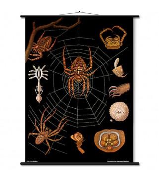 Vegetativni živčani sustav (1610)