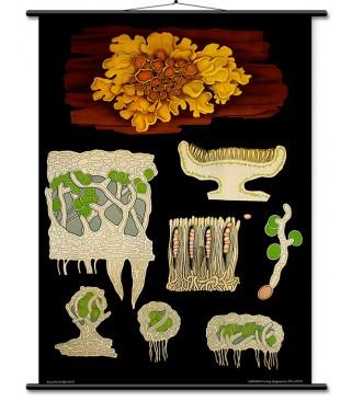 Vegetativno razmnožavanje biljaka