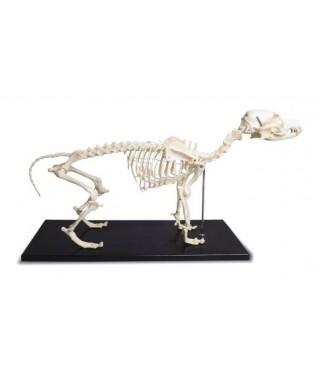 Model Kostur psa