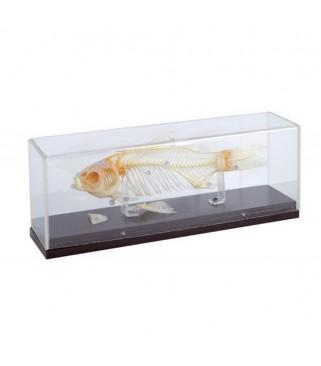 Kostur ribe