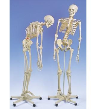 Kostur fleksibilne kralježnice
