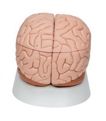 Mozak 5 dijelova
