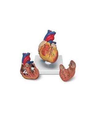 Srce klasično, 2 dijela