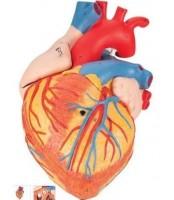 Srce 2x, 4 dijela