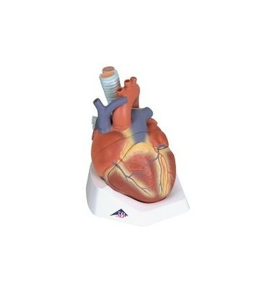 Srce 7 dijelova