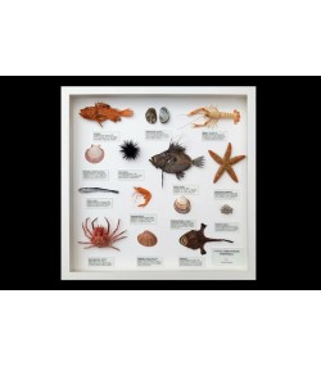 Fauna jadranskog podmorja, mala