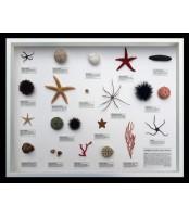 Fauna jadranskog podmorja, velika