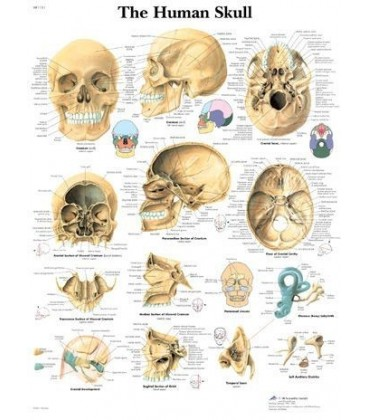 Biljni organi i njihova funkcija