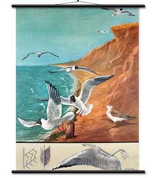 Morski galeb i ptičji let
