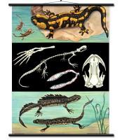 Iguana/salamander