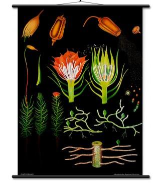 Boca PE 250 mL čep cvjetić