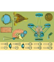 Boca sisaljka staklena 500 mL